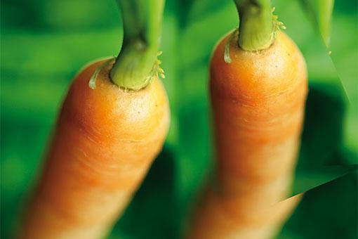 Docteur-Renaud-carotte